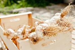 Knoblauch in einem hölzernen Rahmen Stockfoto