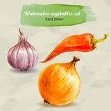 Knoblauch, glühender Pfeffer und Zwiebel Gezeichneter Gemüsesatz des Vektoraquarells Hand Stockfotos
