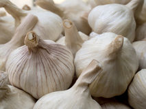 Knoblauch ist für sein scharfes Aroma am meisten benutzt Lizenzfreies Stockfoto