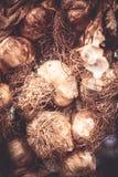 Knoblauch ist für sein scharfes Aroma am meisten benutzt Lizenzfreie Stockbilder