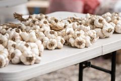 Knoblauch rudert auf dem Tisch an der Marktmesse lizenzfreies stockfoto
