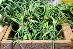 Knoblauch scapes (grüne Knoblauchoberteile) am Markt des Landwirts Lizenzfreies Stockfoto