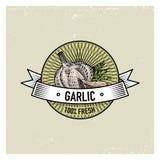 Knoblauch-Weinlesesatz von Aufklebern, von Emblemen oder von Logo für vegeterian Lebensmittel, das Gemüse übergeben gezogenes ode vektor abbildung