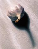 Knoblauchknolle auf weißem Hintergrund lizenzfreie stockfotografie