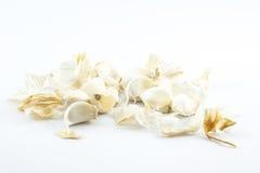 Knoblauchnelken auf einem weißen Hintergrund Lizenzfreie Stockfotos