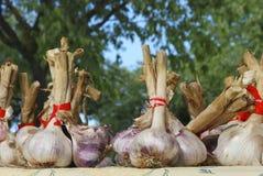 Knoblauchnelken an einem Landwirtmarkt Lizenzfreies Stockbild