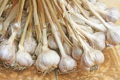Knoblauchpflanzengruppen lizenzfreies stockbild
