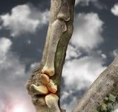 Knochen Stockfoto