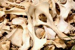 Knochen Stockfotos