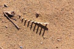 Knochen auf dem Sand Stockbild