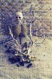 Knochen des menschlichen Körpers des Stilllebenkonzeptes und altes Spinnennetz auf trockenem branc Lizenzfreie Stockfotos