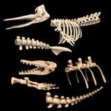 Knochen und Fragmentskelette von alten Fischen Stockfoto
