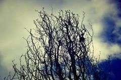 Knochen von Bäumen Stockfoto