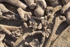 Knochen von den Leuten durchgeführt von den Türken Exhumierung von durchgeführten Leuten stockfoto