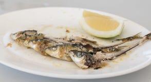 Knochen von fünf gegessenen Sardinen, auf einer weißen Platte Stockbilder