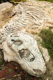 Knochendinosaurier Stockfotos