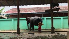 KNOCK-OUT CHANG, TAILANDIA - 14 DE ABRIL DE 2018: Los elefantes se están lavando y se están limpiando en la prohibición Changthai metrajes