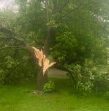Knockade tack vare tunga vindar för träd Arkivfoto