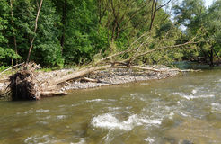 Knocked down a tree on the riverbank Royalty Free Stock Photography