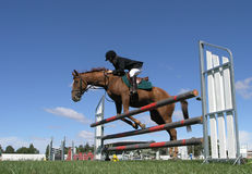 Knocked Knees. A horse taking out the top rail of a jump. Taken at the Horse of the Year 2007 Hastings New Zealand Royalty Free Stock Images