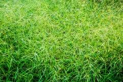 Knoei groen gras Royalty-vrije Stock Afbeeldingen