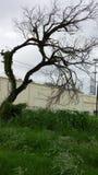 Knoestige neiging over de winterboom royalty-vrije stock fotografie