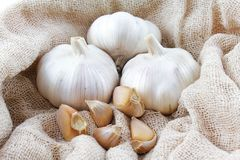 Knoflook Stock Foto's