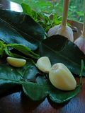 Knoflook en Thais basilicum op kalkblad Royalty-vrije Stock Afbeelding