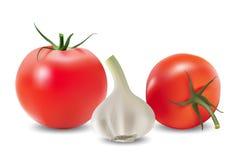 Knoflook en tomaat Vector Illustratie