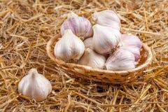 Knoflook horizontale banner Eco de landbouwconcept Gehele garlics en kruidnagels in stromand op stuk van het ontslaan op bruine h Stock Fotografie