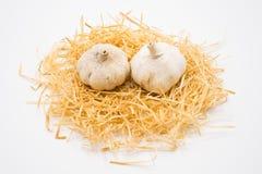 Knoflook op het nest met geïsoleerde witte achtergrond die in studio schieten royalty-vrije stock foto