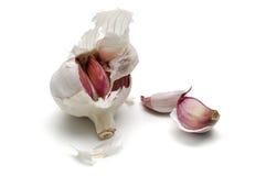 Knoflook, sativum alium Royalty-vrije Stock Afbeelding