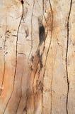 Knoop houten Achtergrond Stock Foto