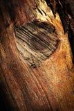 Knoop op hout zonder schors stock foto