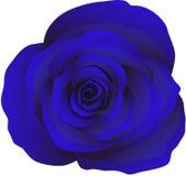 Knop van blauwe rozen, vector Stock Fotografie