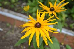 Knop van bloem met gele bloemblaadjes royalty-vrije stock foto