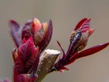 knop van bloem op een achtergrond van blauwe hemel stock afbeelding