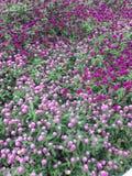 Knopf-Blume Stockbild
