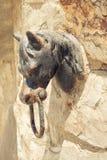 Knopp för dörr för hästhuvud arkivfoto