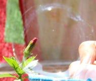 Knopp i en bubbla Arkivfoto