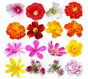Knoppar av färgrika blommor Arkivbild