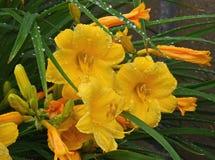 Knoppar & blom Fotografering för Bildbyråer
