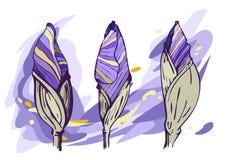 Knoppar för vektor 3 av iriers mot en bakgrund av lilor och guling royaltyfri illustrationer