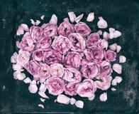 Knoppar och kronblad av en rosa färgros på en mörk rostig bakgrund Royaltyfria Foton