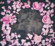 Knoppar och kronblad av rosa rosor som är flatlay på en mörk bakgrund Arkivfoto