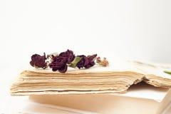 Knopparna torkade rosor Arkivfoto