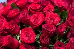 Knoppen van rode rozen Royalty-vrije Stock Fotografie