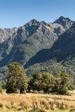 Knopplägenheter i den Fiordland nationalparken, Nya Zeeland Royaltyfri Foto