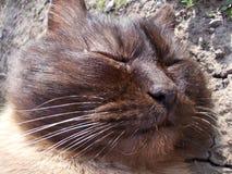 Knorrige kat Stock Afbeeldingen