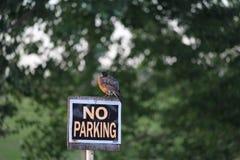 Knorrige Robin op Geen Parkerenteken stock fotografie